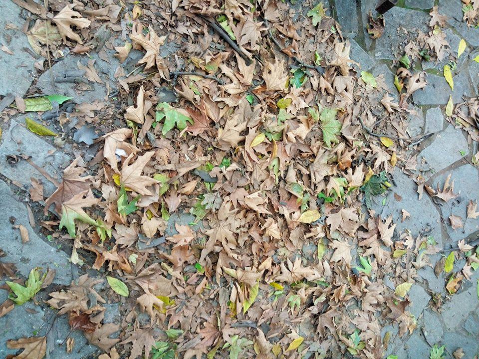 Ποντισμένα Φύλλα